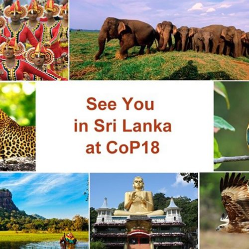 Christmas At CITES: Santa In Sri Lanka