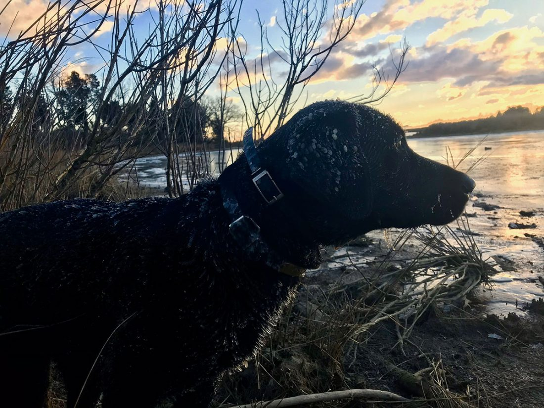 A Duck Hunter's Thoughts on Preparing the Bounty
