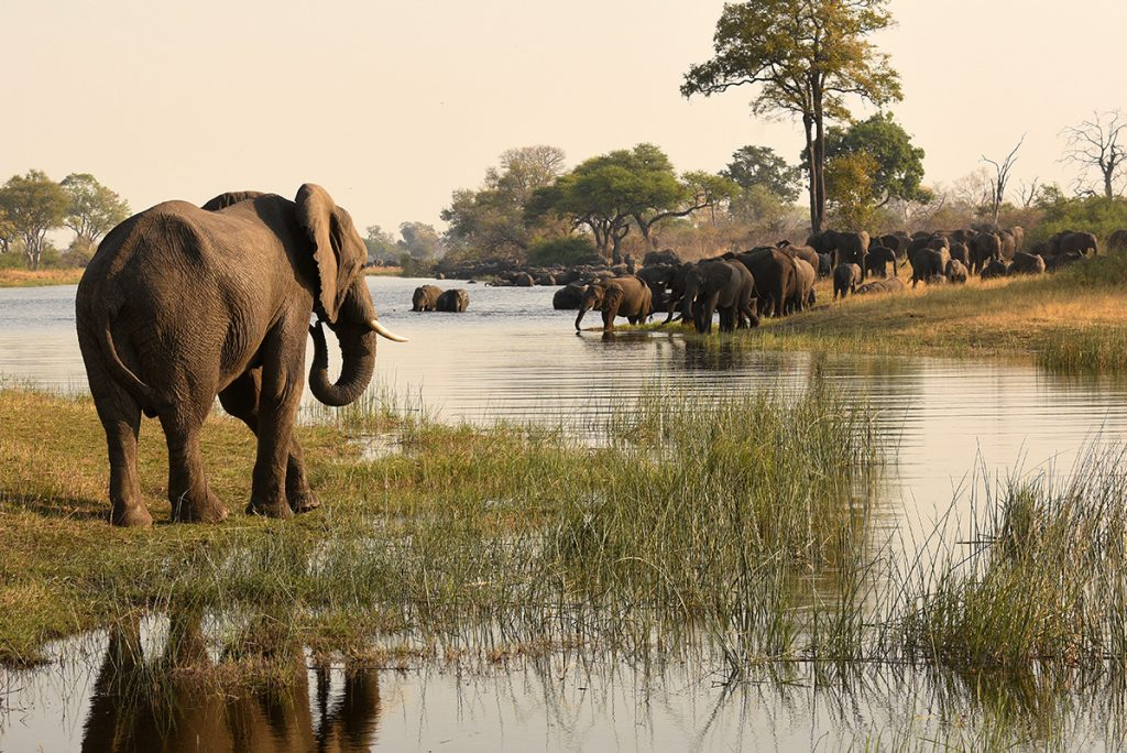 More than half of Namibia's 22,000 elephants inhabit the far northeast of the country. They are an important tourist attraction, but also a significant burden for subsistence farmers. Helge Denker photo