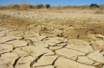 Drought in Damaraland threatens desert-adapted lions but also brings opportunities