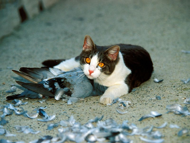 "From Rachel E. Gross' article ""The Moral Cost of Cats A bird-loving scientist calls for an end to outdoor cats once and for all"". Saverio Maria Gallotti / Alamy photo"